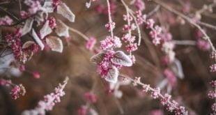 ogrod zimowy